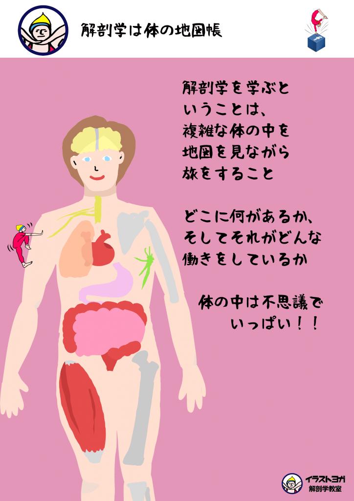 解剖学は体の地図帳