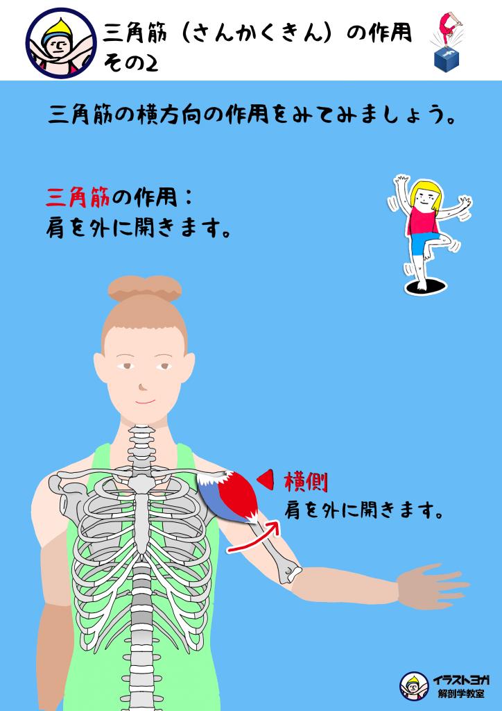 解剖学|ヨガ