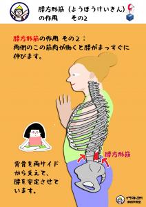 腰方形筋|解剖学ヨガ