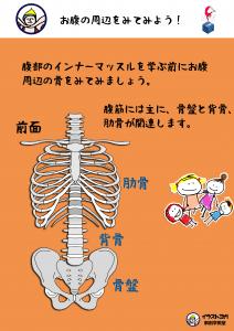 ヨガ解剖学|骨盤