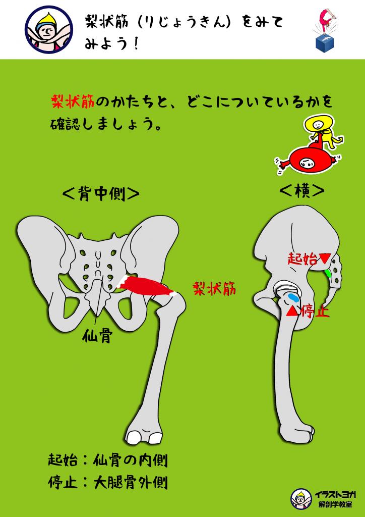 梨状筋 解剖学