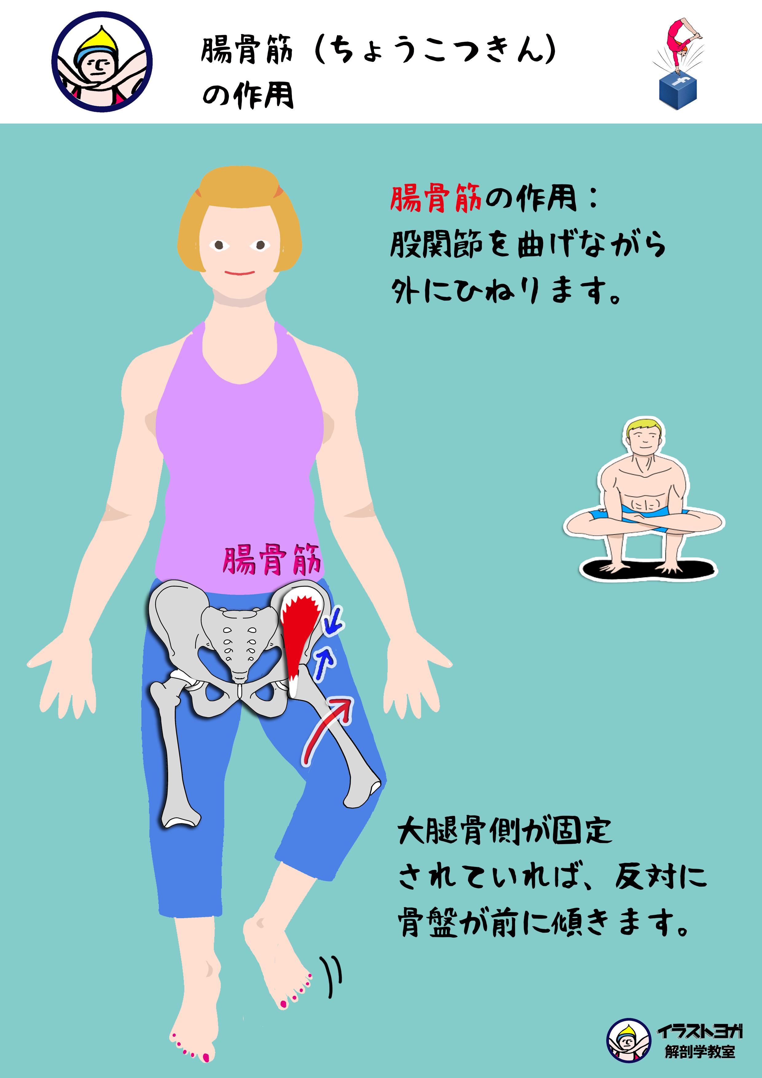 腸骨筋(ちょうこつきん)まとめ...