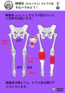ヨガ解剖学