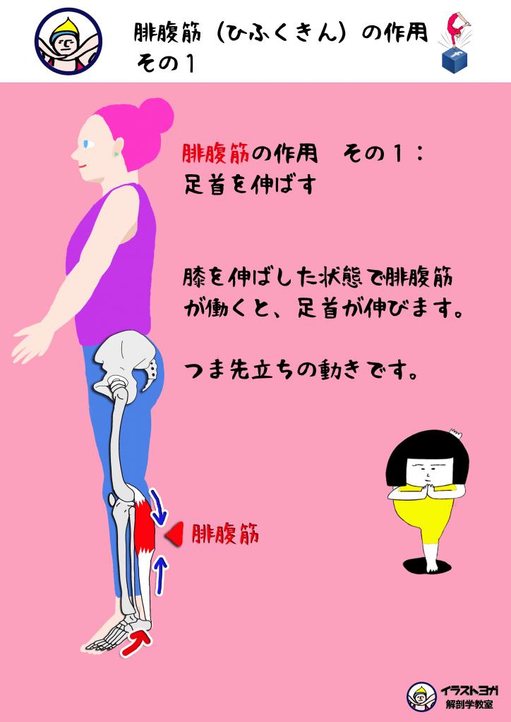 解剖学ヨガ