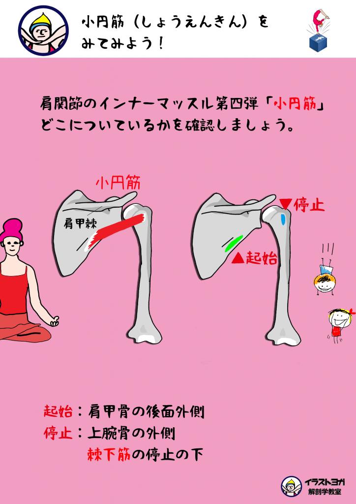 小円筋 イラスト