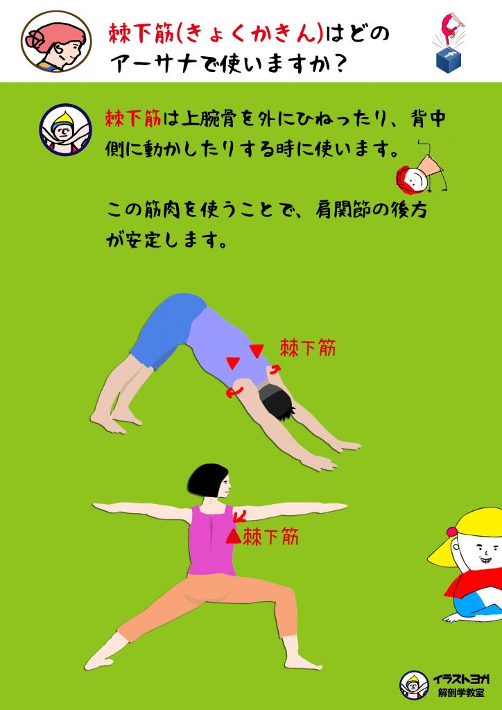 アーサナ解剖学