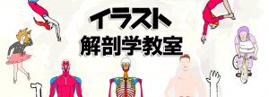 イラスト解剖学