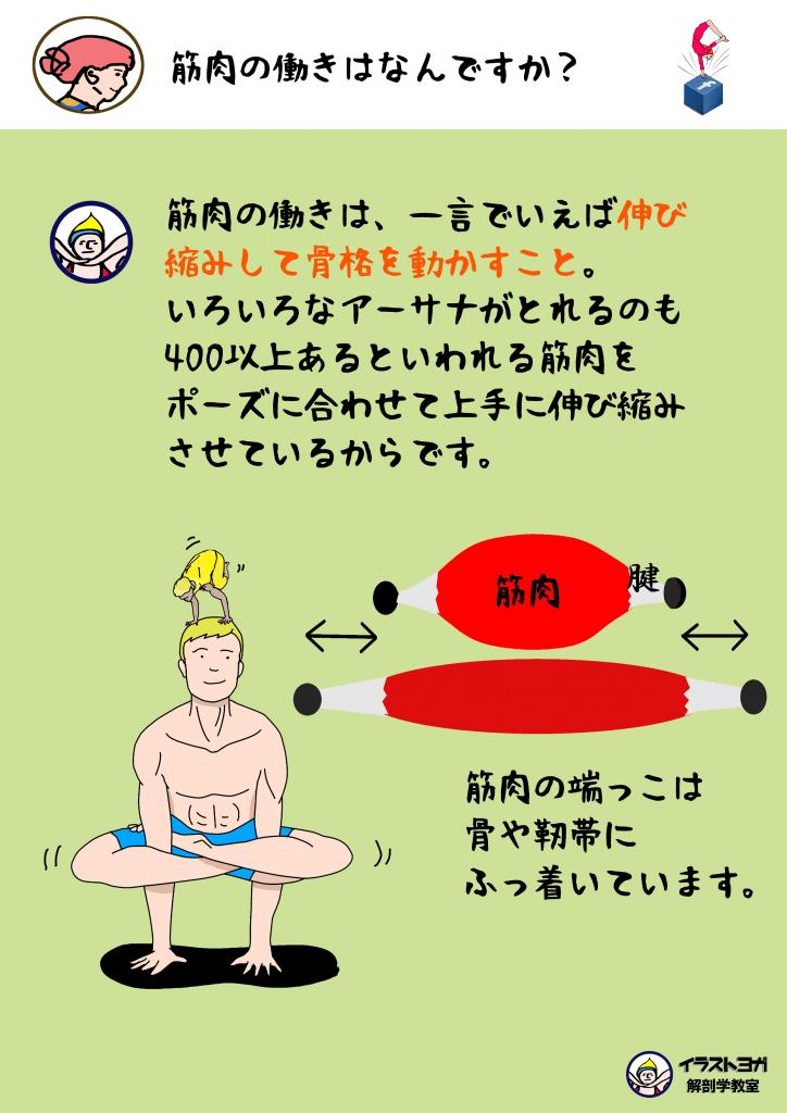 ヨガと筋肉