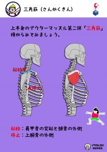 ヨガ解剖学|三角筋