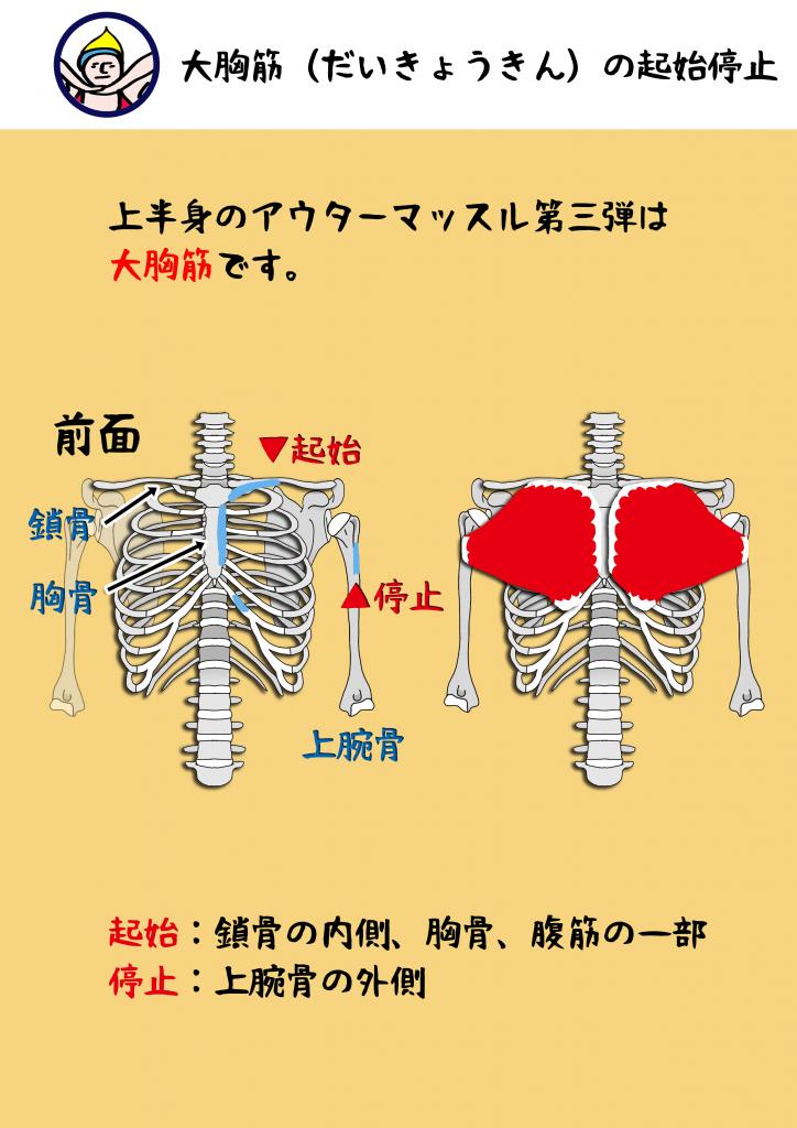 大胸筋|ヨガ解剖学