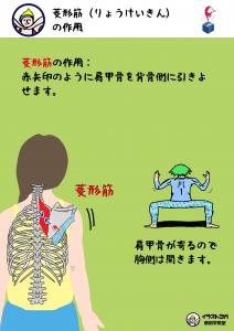 ヨガ解剖学|菱形筋
