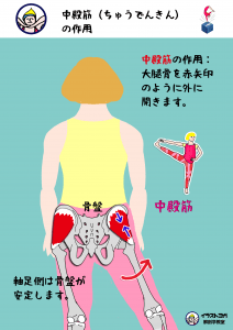 ヨガ解剖学|インナーマッスル
