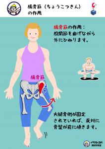腸骨筋|解剖学ヨガ