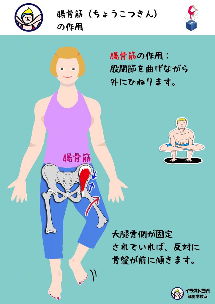 アーサナ 解剖学