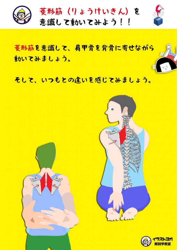 ヨガ解剖学|アーサナ