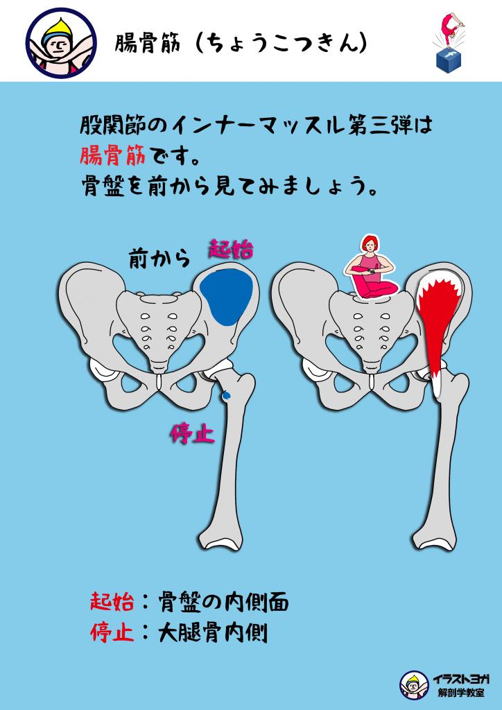 肩関節の機能解剖④~機能学的関節~|imok ...