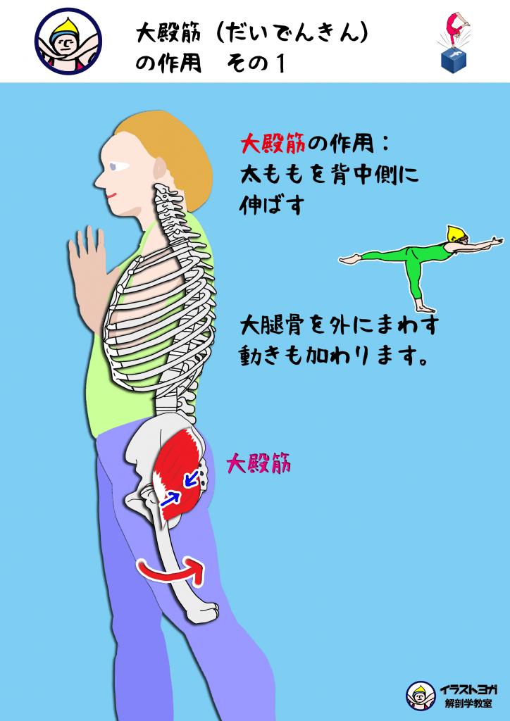 大殿筋の作用|ヨガ解剖学