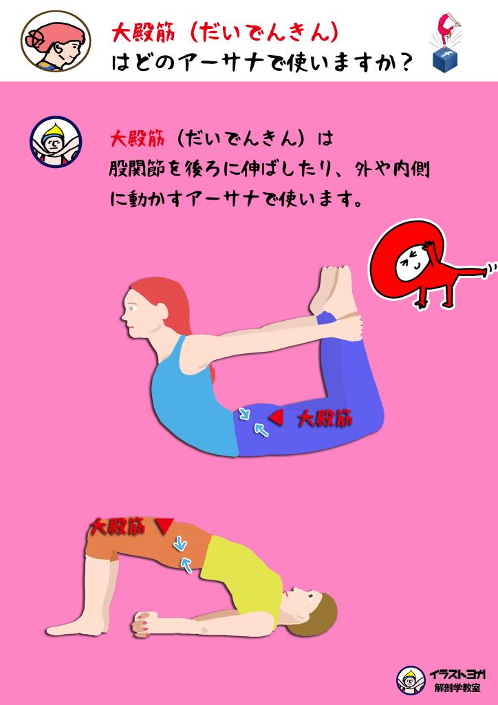 アーサナ|ヨガ解剖学