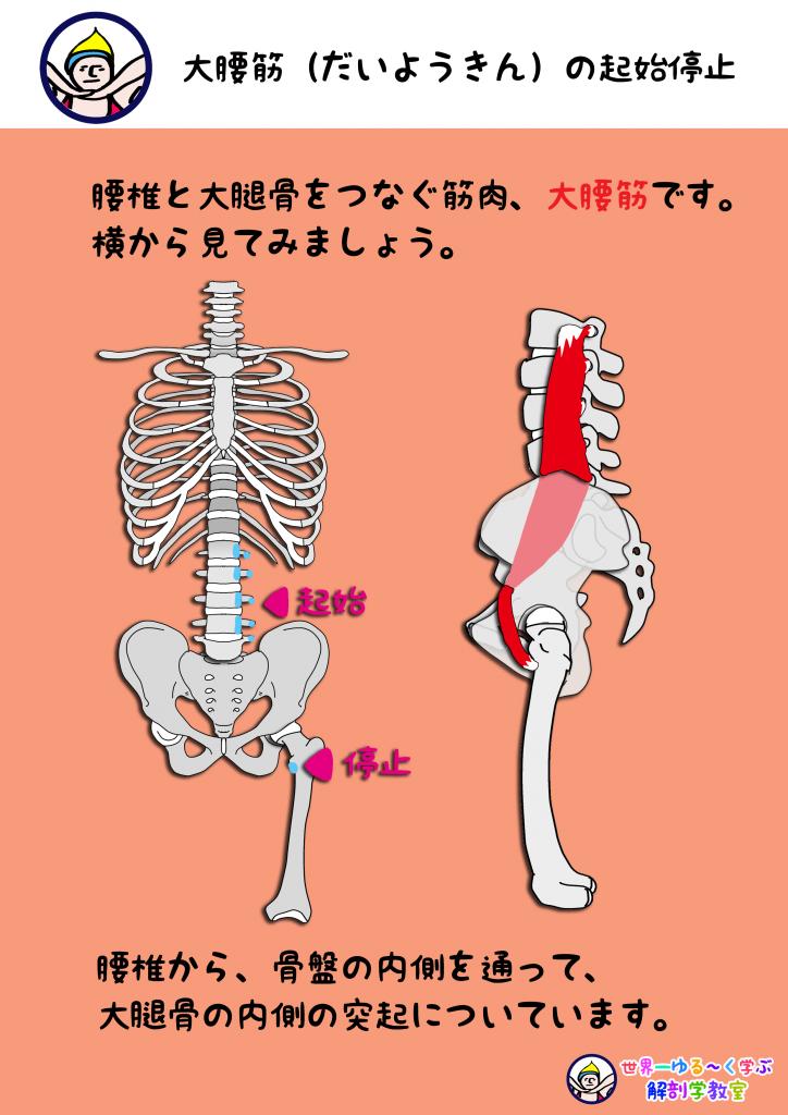 大腰筋 横