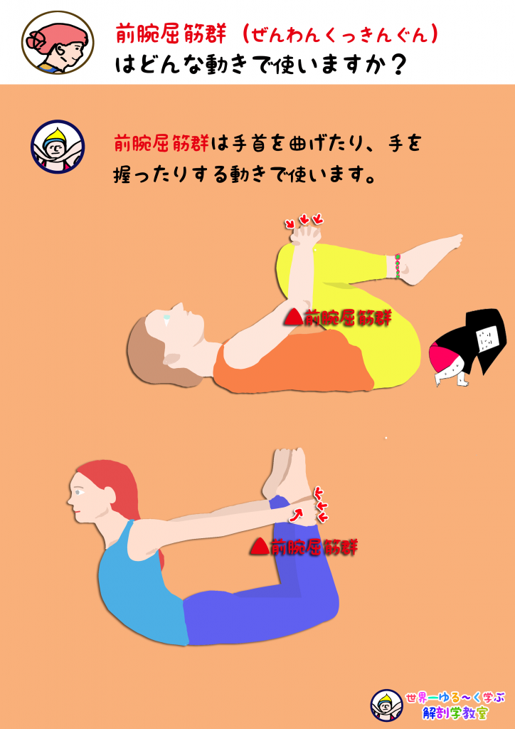 前腕屈筋群を使う動き