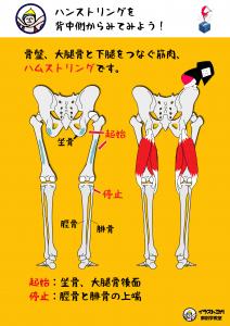 ハムストリング 解剖学