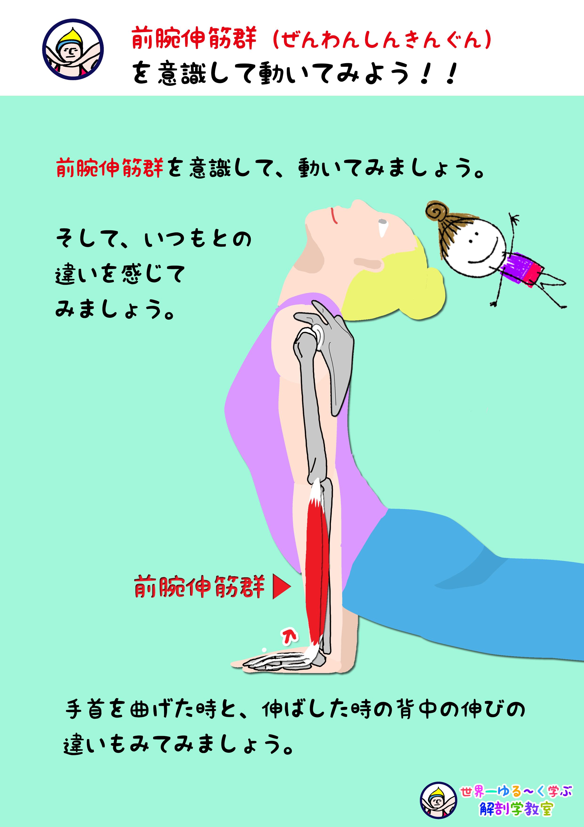 前腕伸筋群を意識する