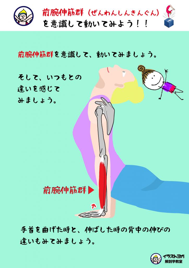 ワークショップ ヨガ解剖学