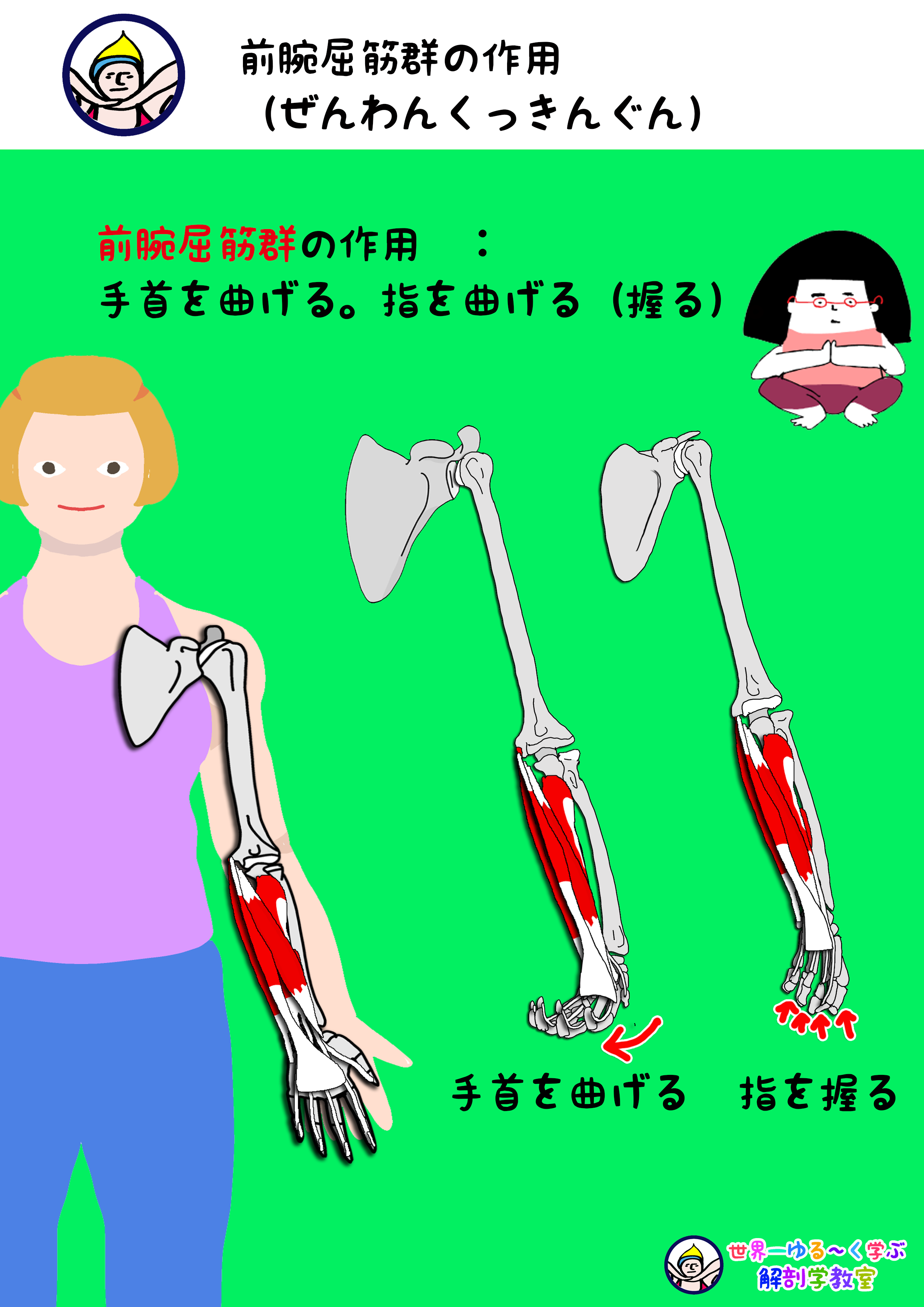 前腕屈筋群の作用