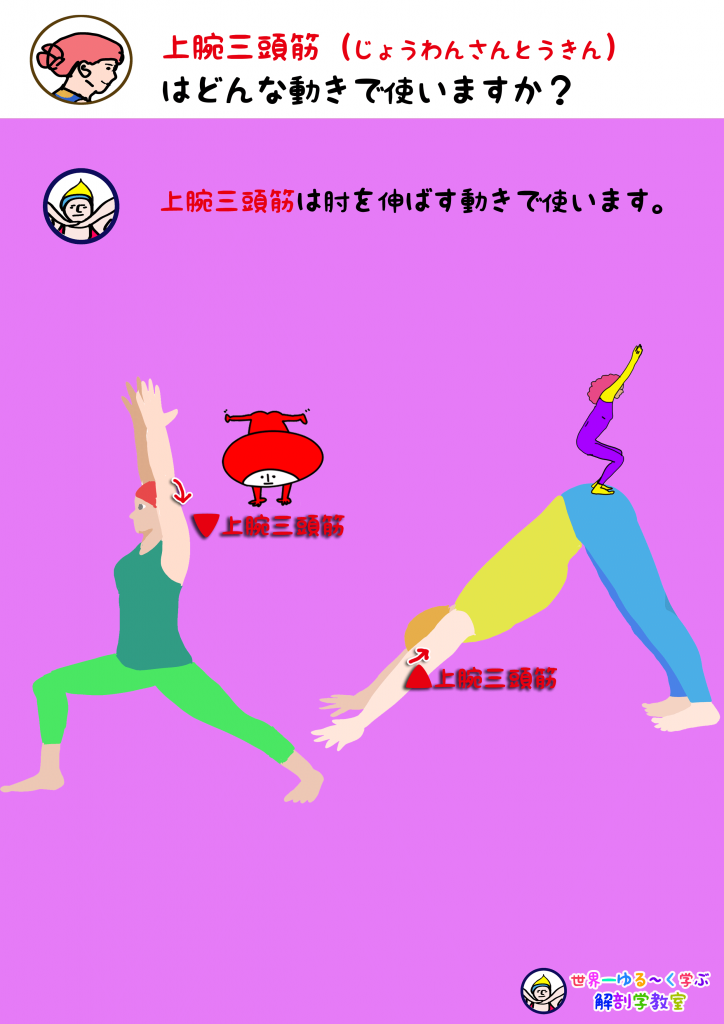 上腕三頭筋を使う動き