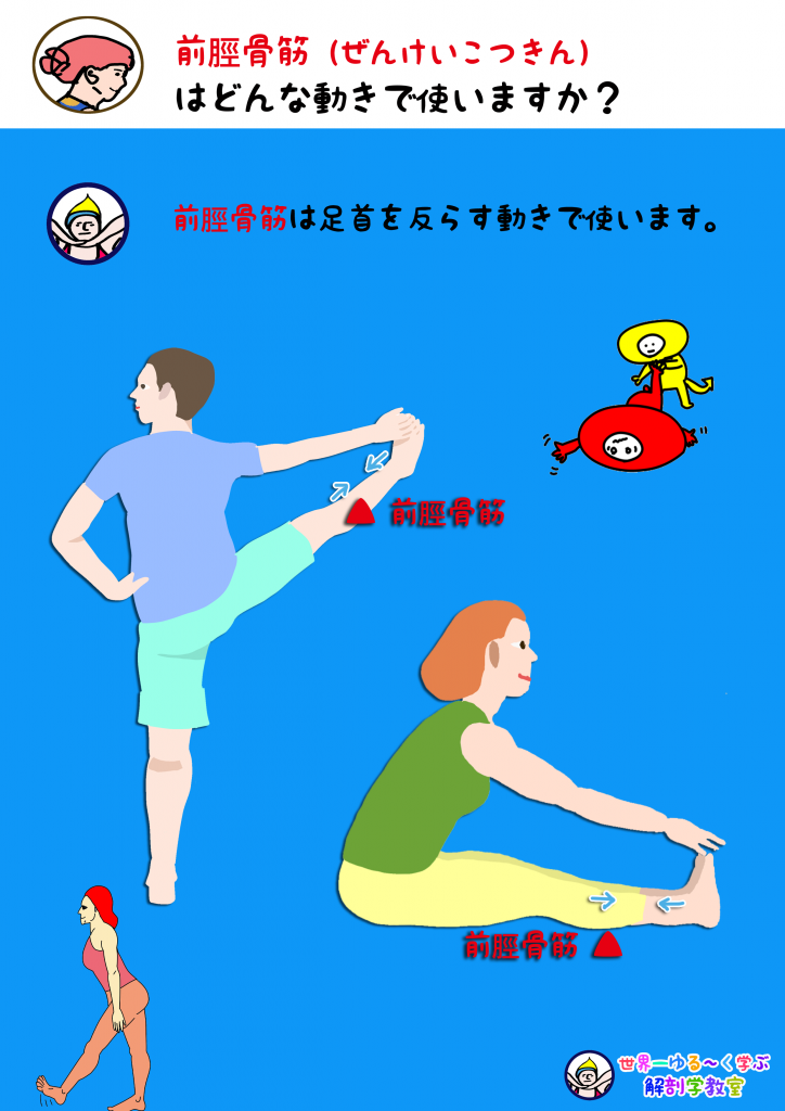 前脛骨筋を使う動き