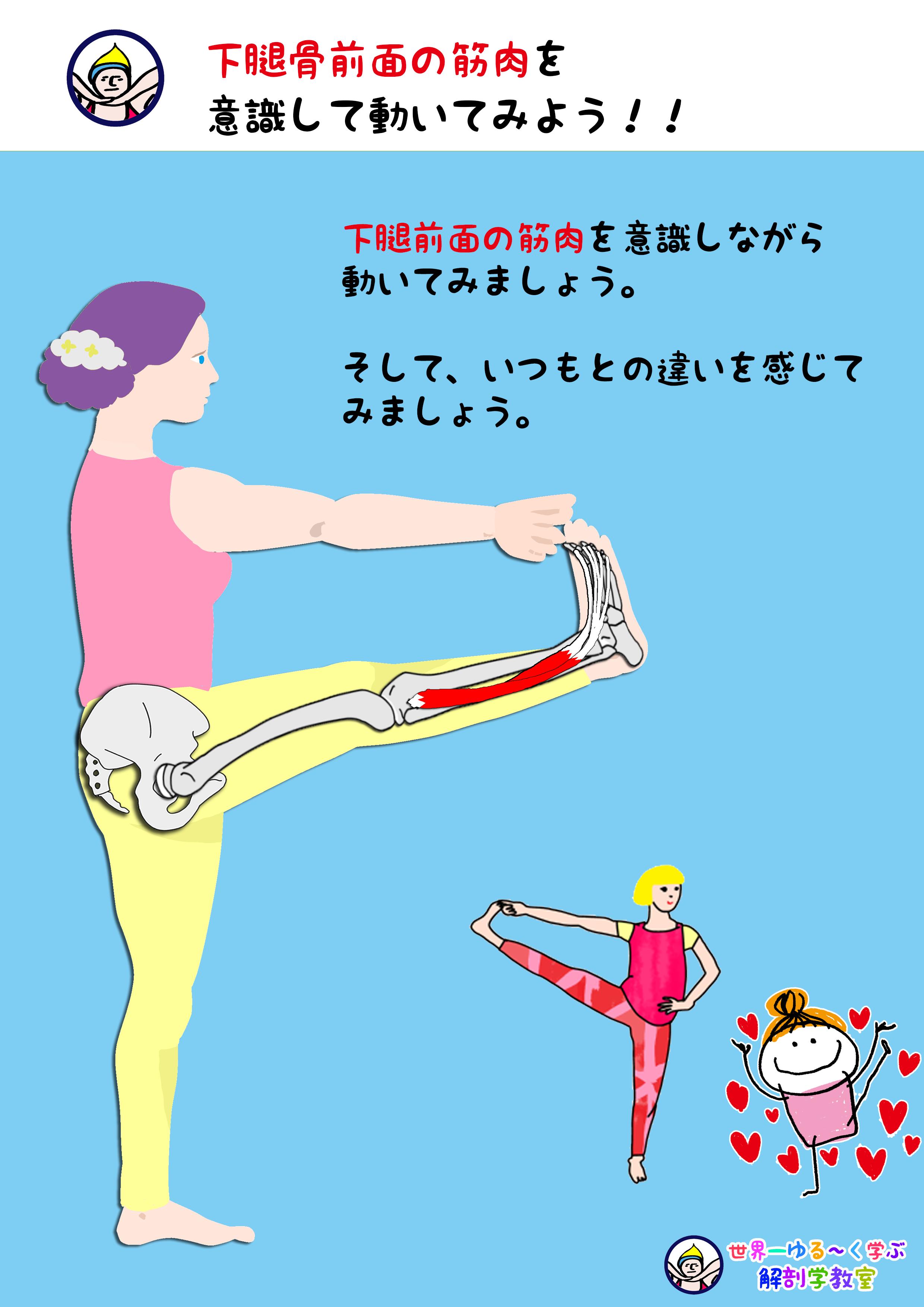 下腿骨前を意識する