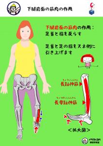 ヨガ解剖学講座