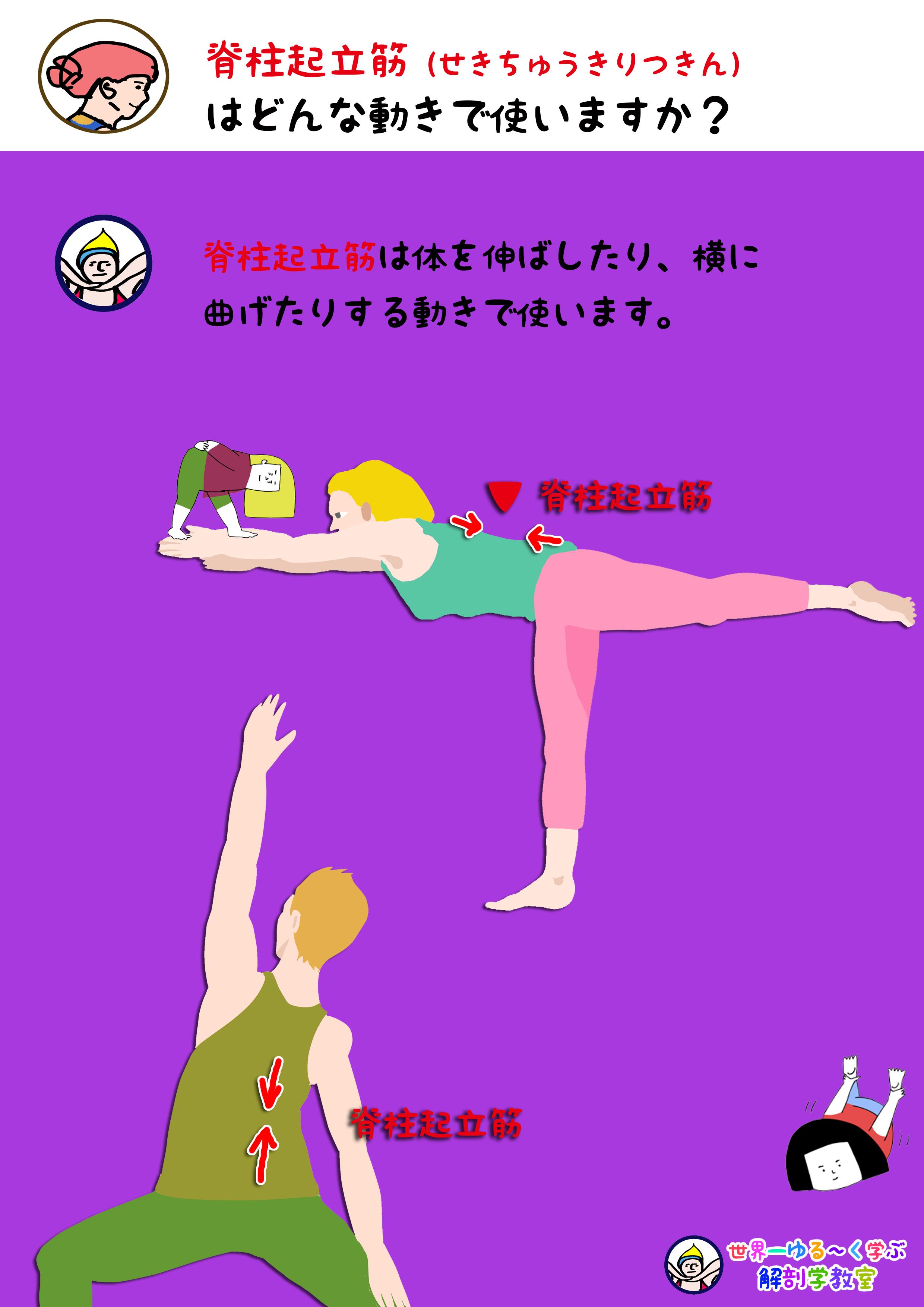 脊柱起立筋を使う動き