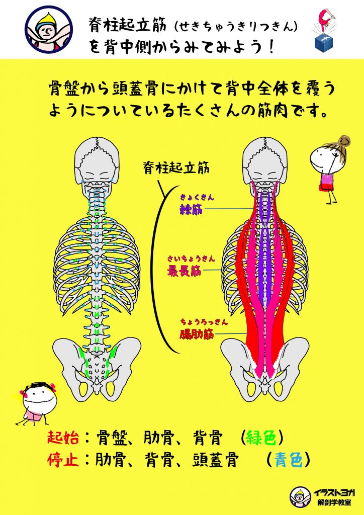 解剖学,イラスト
