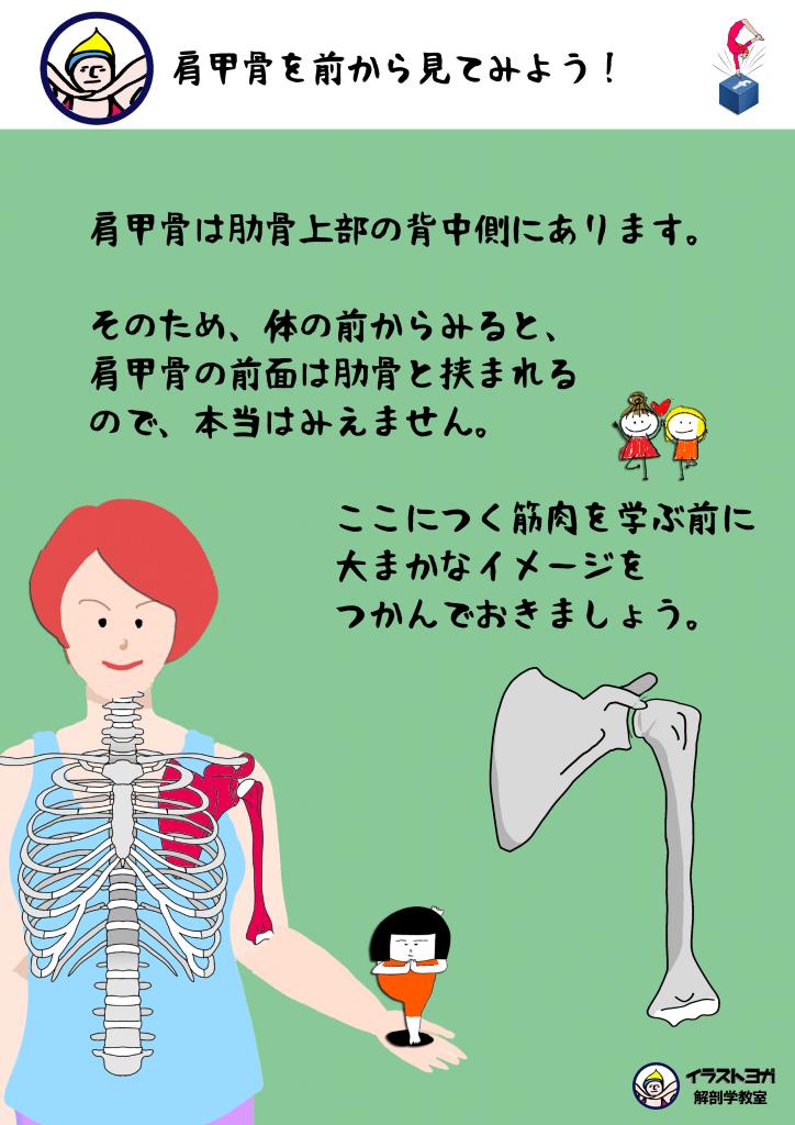 肩甲骨の位置