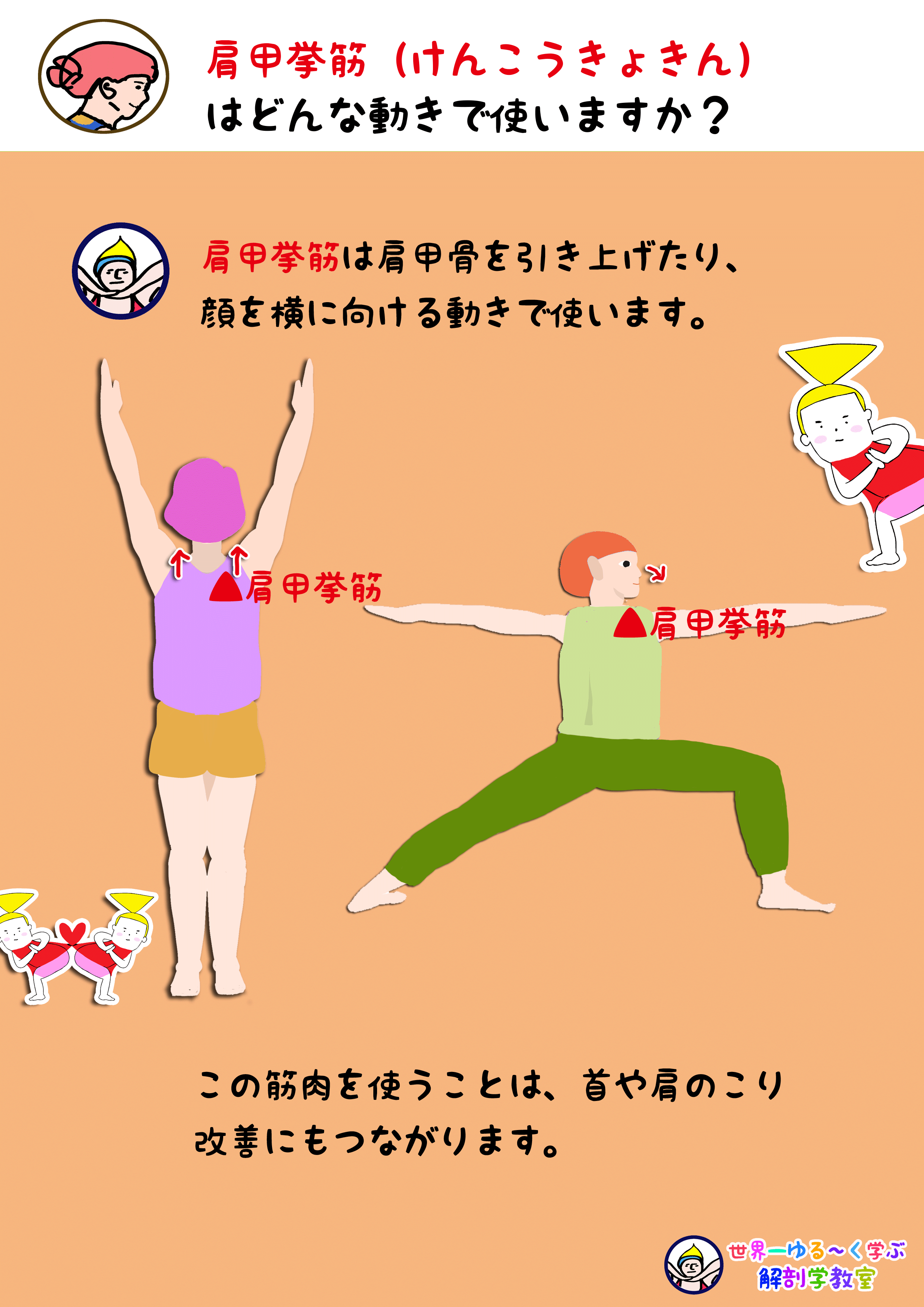 肩甲挙筋を使う動き