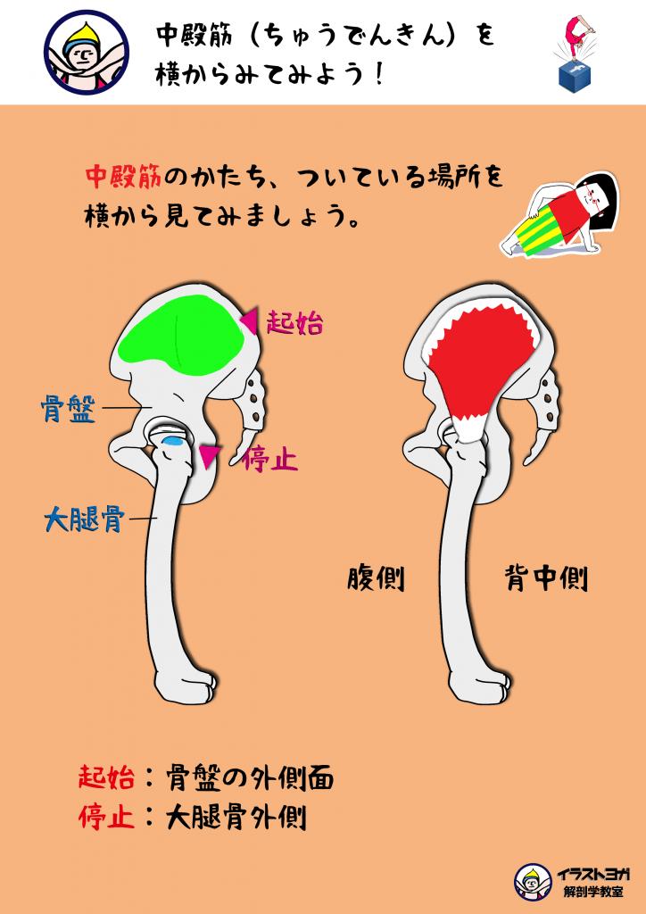 ヨガ 解剖学