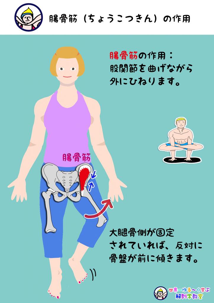 腸骨筋の作用