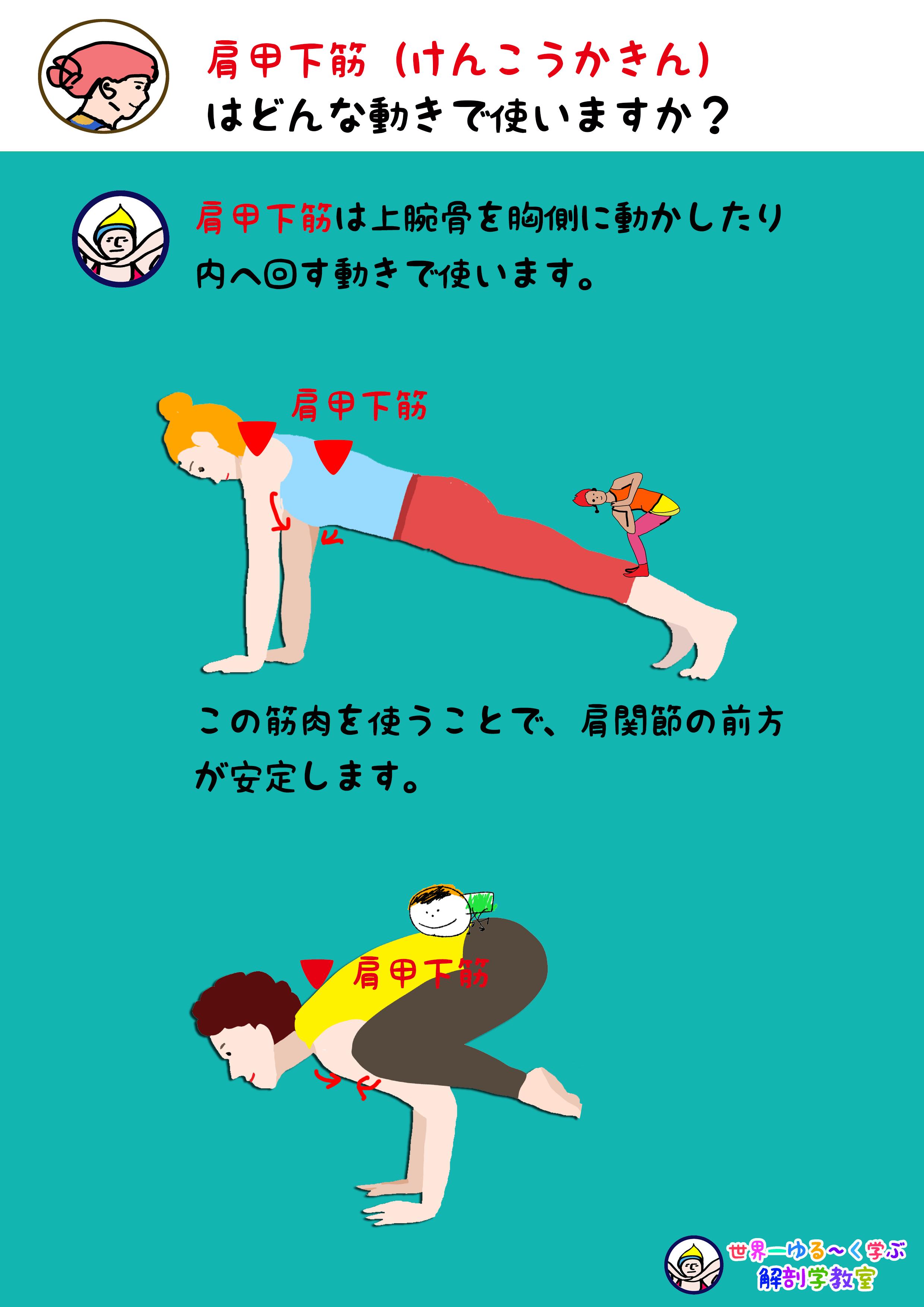 肩甲下筋を使う動き