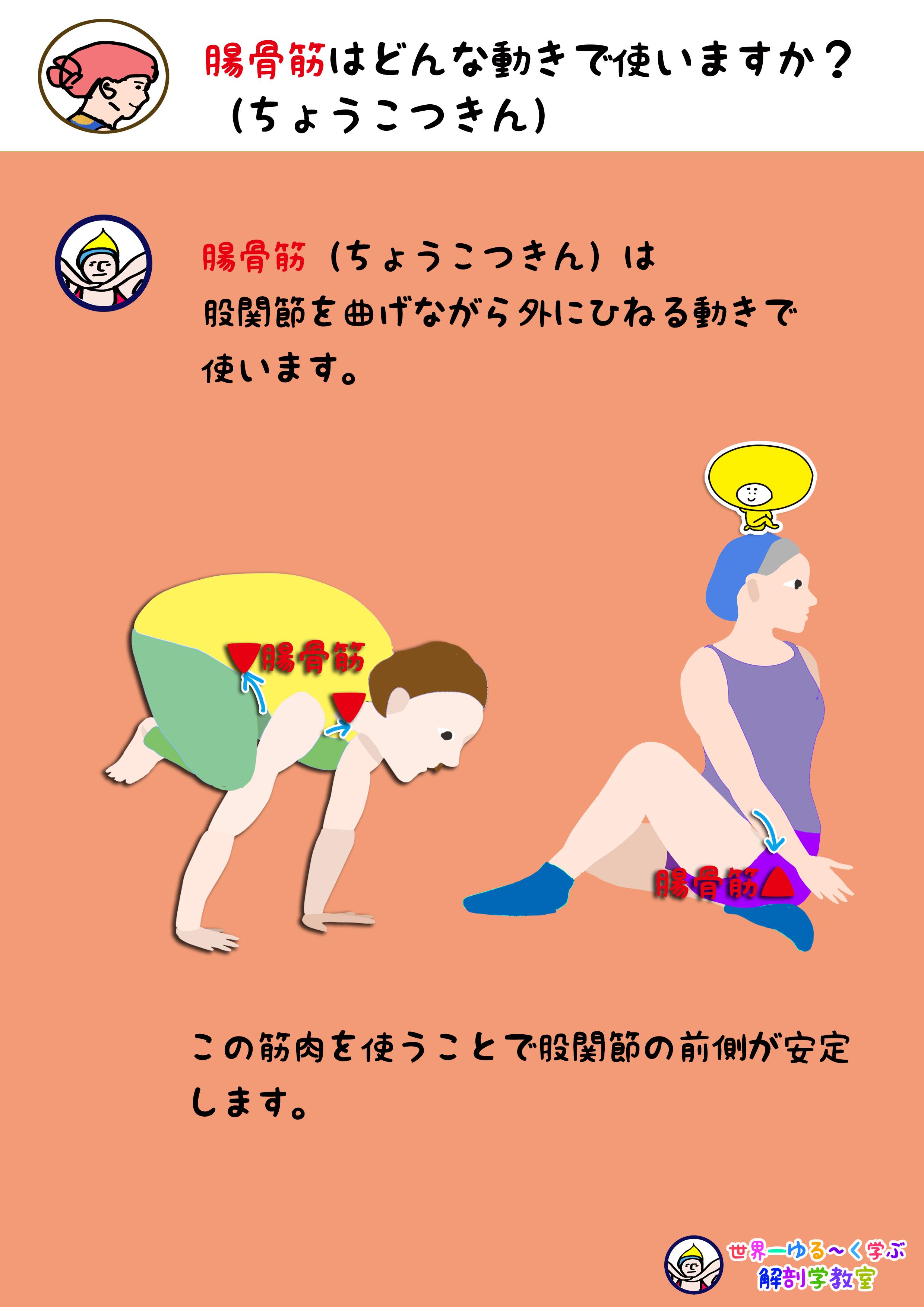 腸骨筋を使う動き