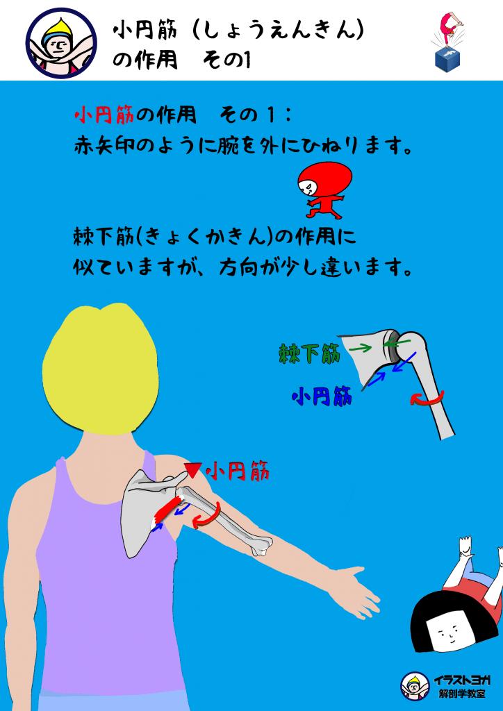 イラスト 解剖学