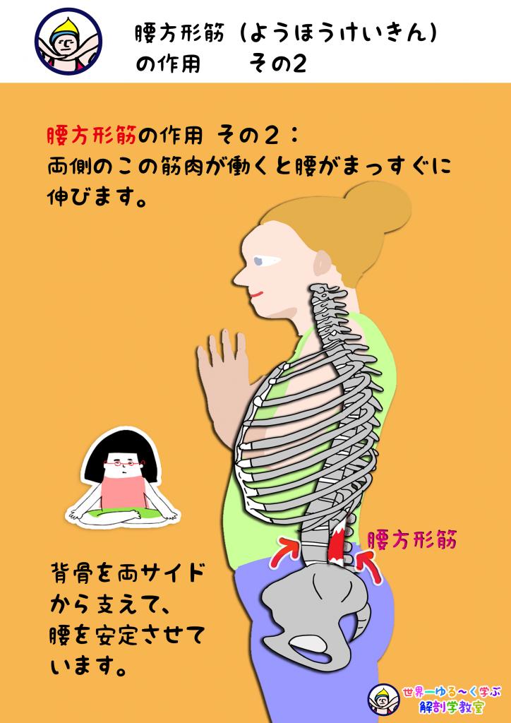 腰方形筋の作用 その2