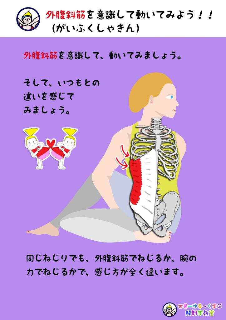 外腹斜筋を意識する