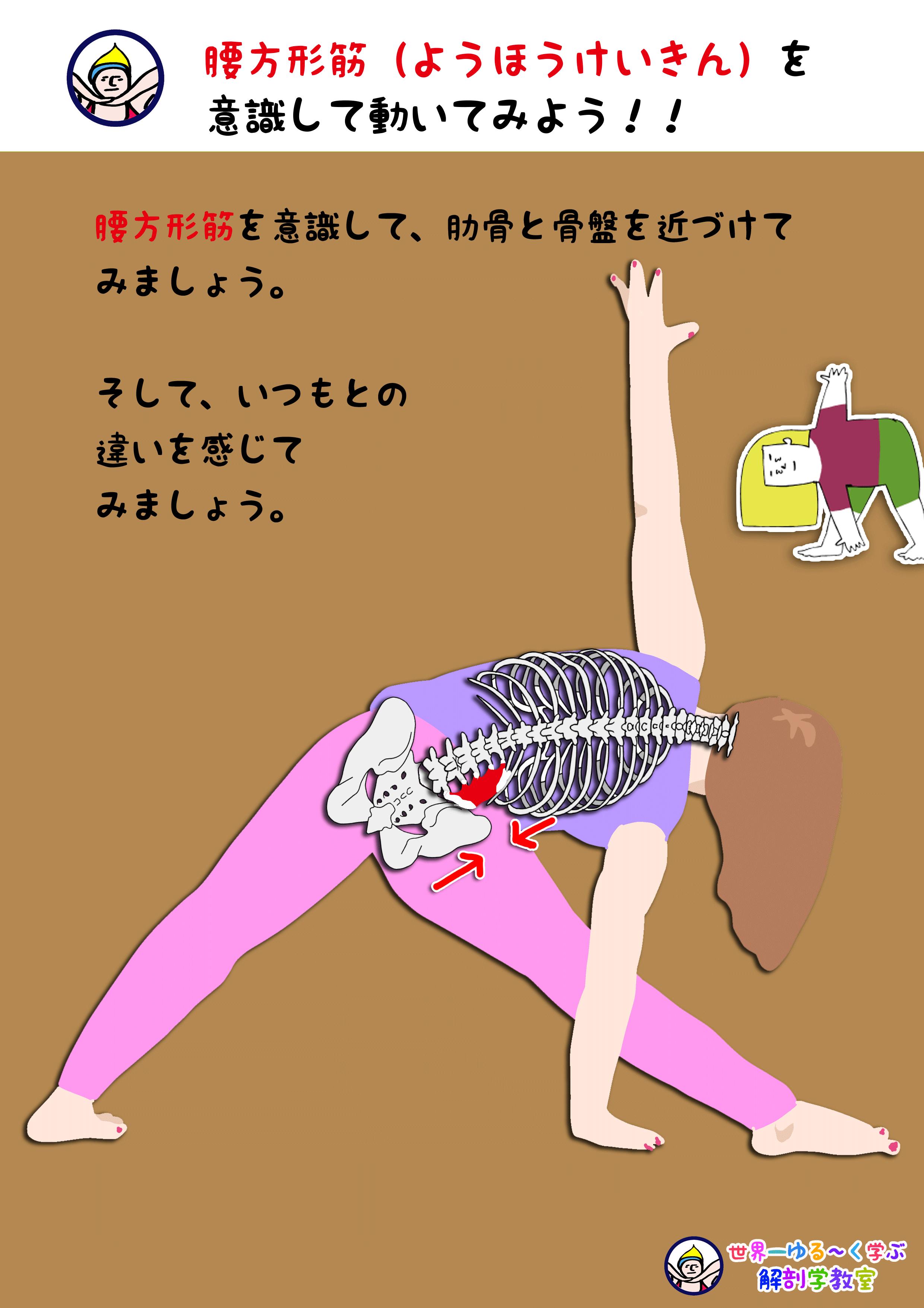 腰方形筋を意識する
