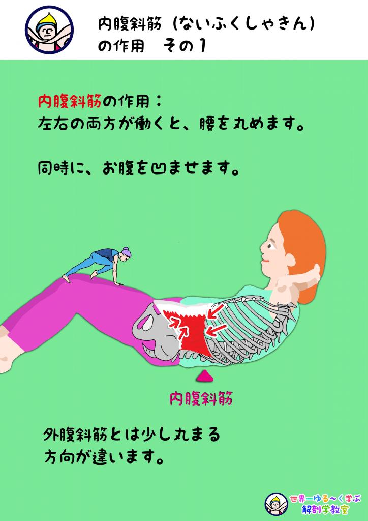 内腹斜筋の作用 その1