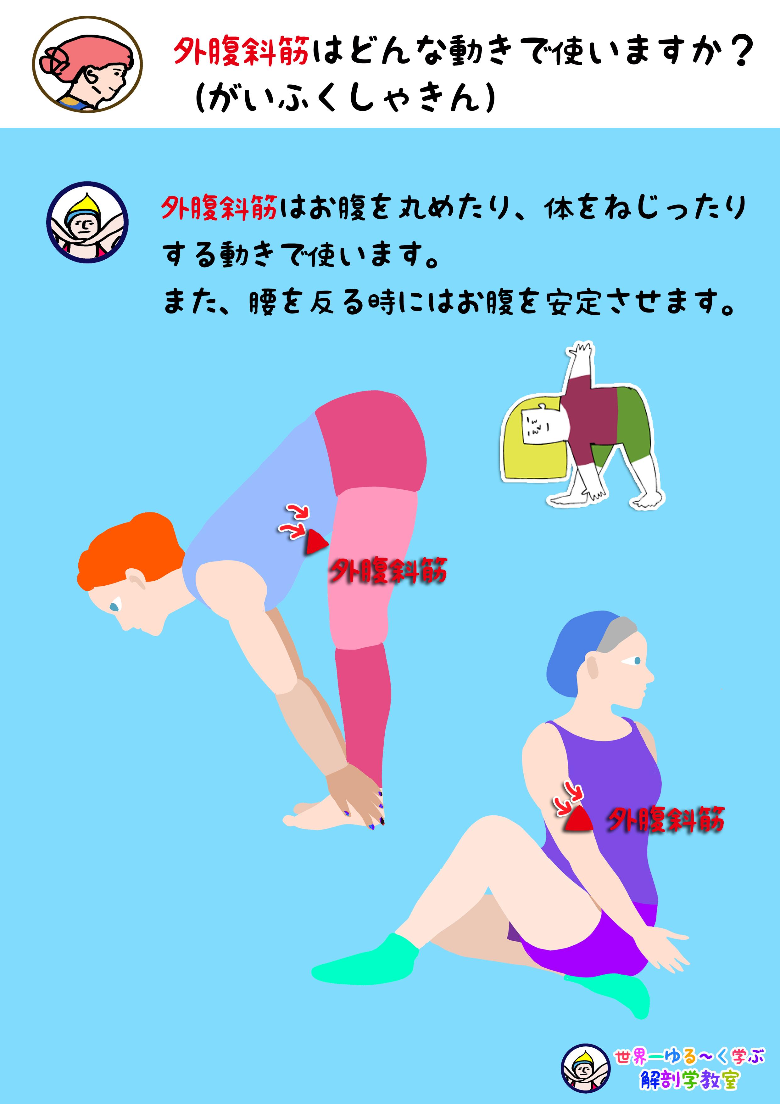外腹斜筋を使う動き