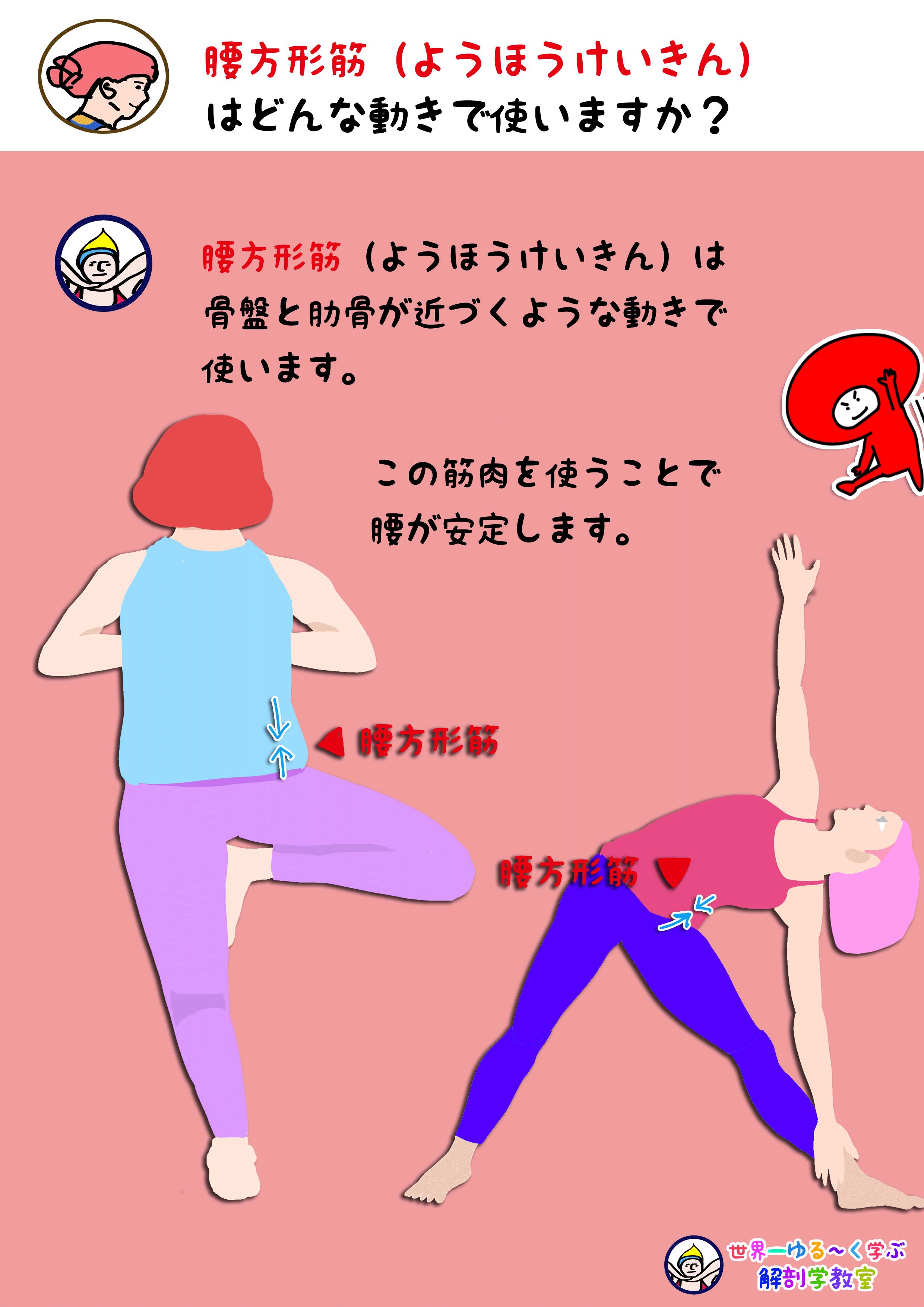 腰方形筋を使う動き