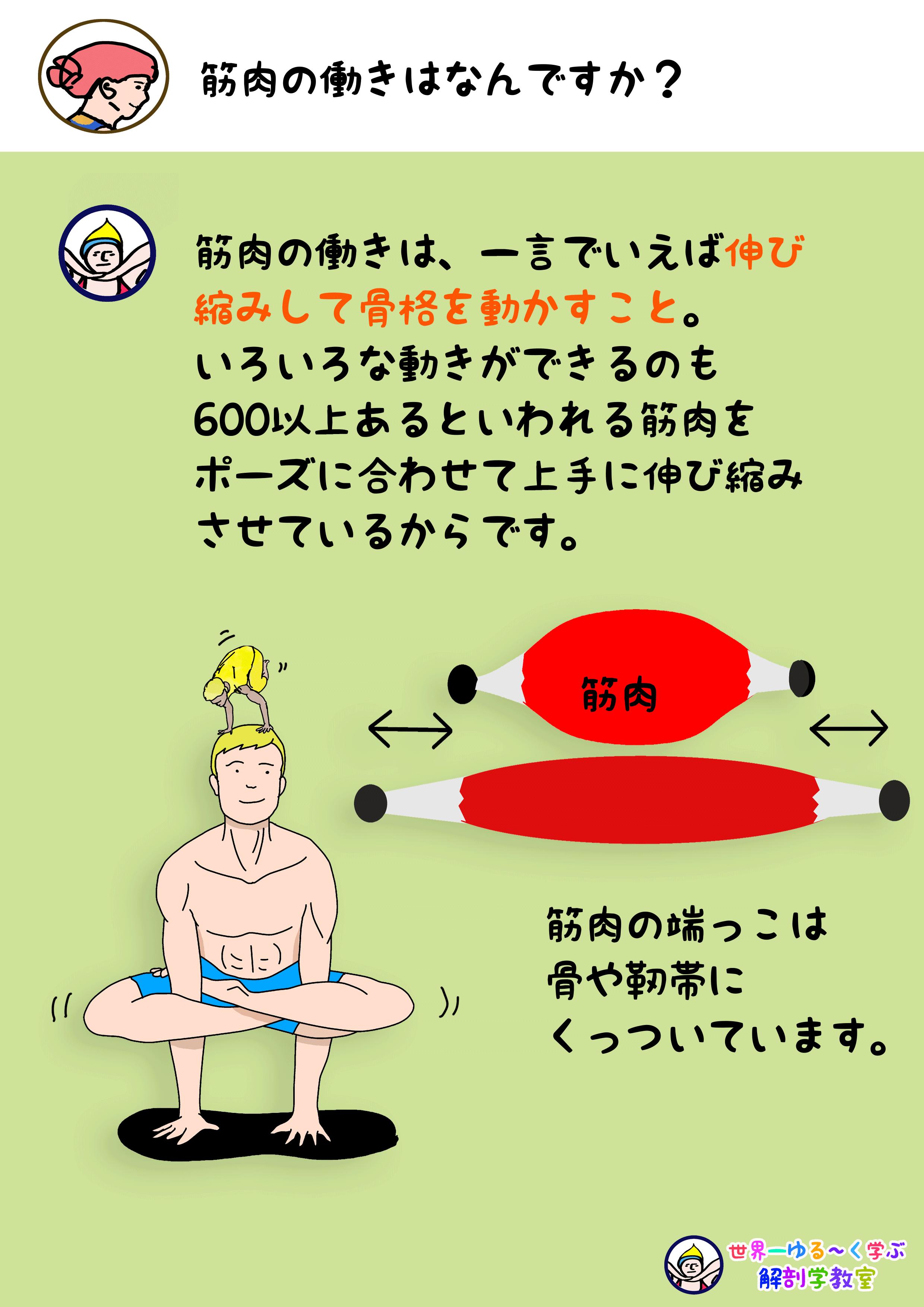 筋肉の働き