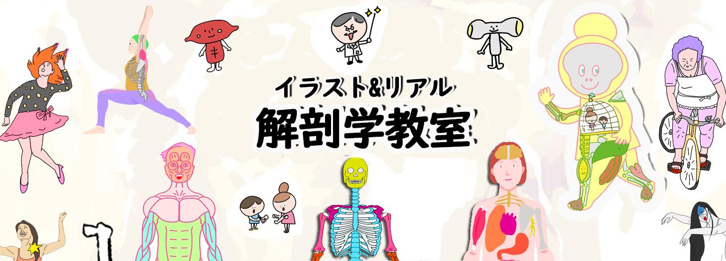 世界一ゆるく学ぶ 解剖学イラスト解剖学教室 世界一ゆるい解剖
