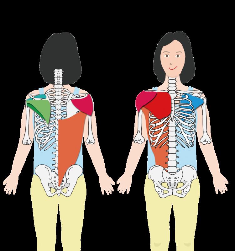 肩を動かす筋肉